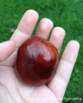 conkers-3