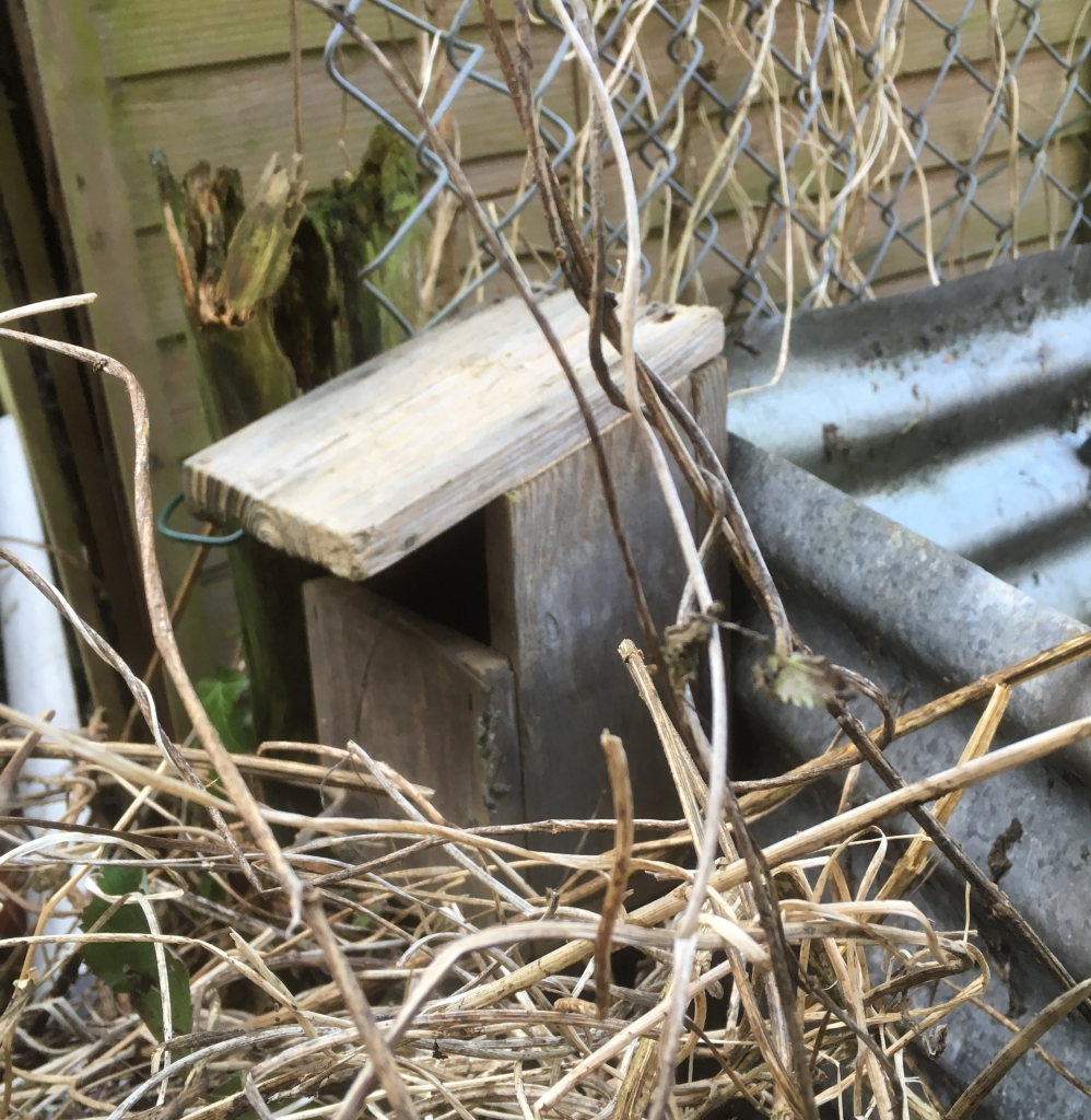 An open fronted robin nest box, hidden away in a quiet corner of my allotment