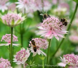 floral fringe 01