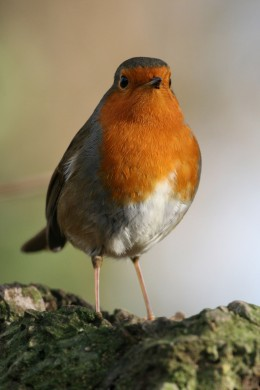 Robin at Rackham Brooks